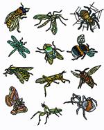 Les huiles essentielles utiles accueil - Insecte rampant maison ...
